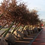 Bomen Julianalaan